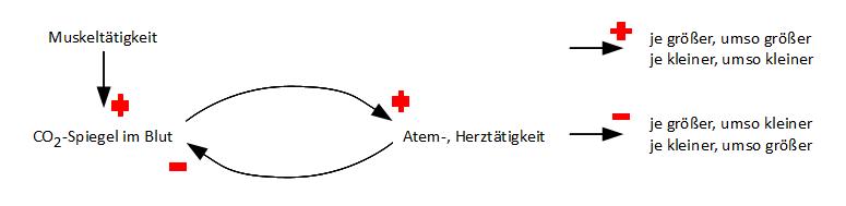 informationsleitung über axon