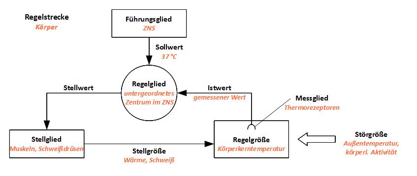 Biologie: 9. Klasse – Schulstoff.org